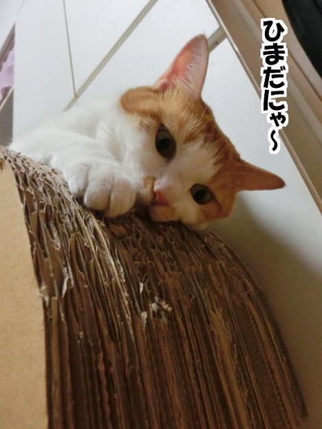 Photos: ひまひま