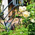 Photos: DSC_7730