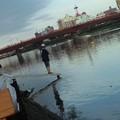Photos: 潮が満ちてきた関係上屋形船待機しとる係員の方が何か神々しいなう