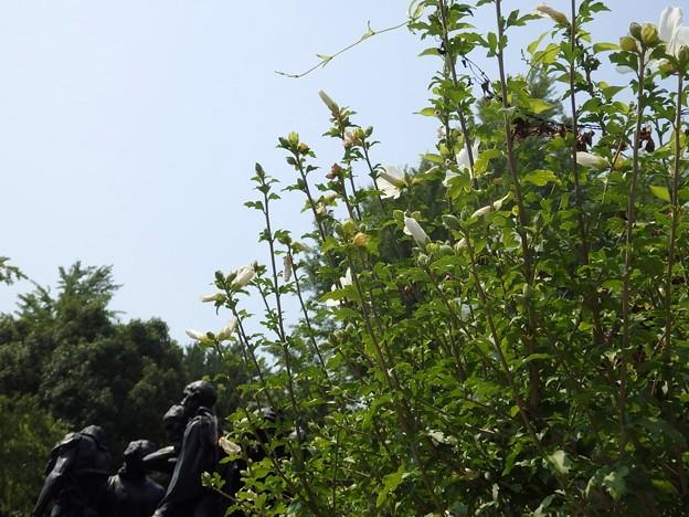 国立西洋美術館の庭