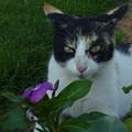 写真: 『オアシスの花愛づる野良君』 Stray cat & Flowers