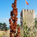 夏草や兵(つはもの)どもが夢の跡 Skopje Fortress