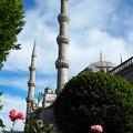 ブルーモスクの手向け花  Offered Roses to the Blue Mosque