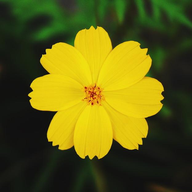 秋の黄色い花