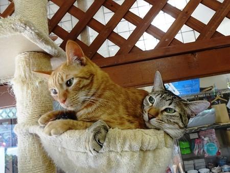 シモン&マサキ「このハンモック、もう少し大きくならないかな」