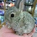 写真: ミニウサギ。 約1ヶ月の赤...