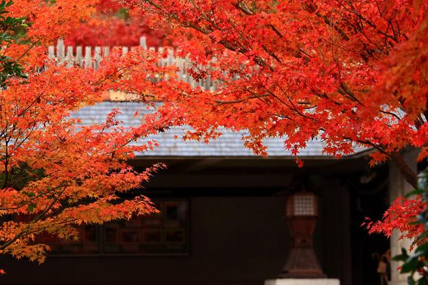 Photos: 神道山黒住教の紅葉。。