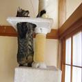 写真: タワーでじゃらし~ナナ編