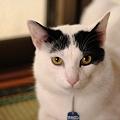 写真: 抗議するうし柄猫