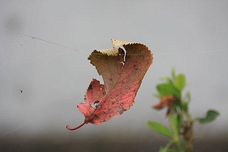 2011.10.03 和泉川 桜