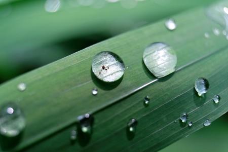 2015.06.20 追分市民の森 雨あがる