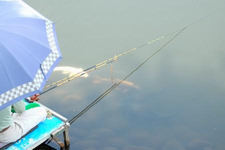 2015.08.03 和泉川 ヘラブナ釣りに鯉