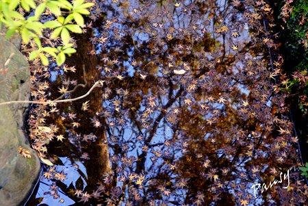 落ち葉を散らした水面・・