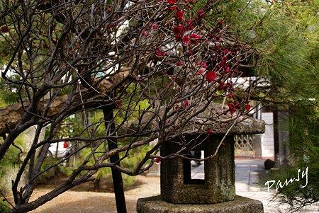 紅い梅の咲く寺院・・1
