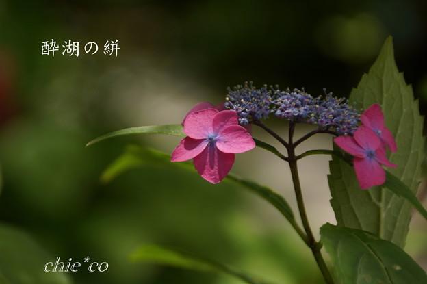 Kamakura-844