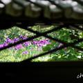 Photos: 東慶寺~水無月-265