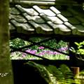 Photos: 東慶寺~水無月-266