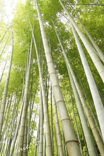 竹林の風~