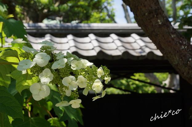 東慶寺~水無月-272