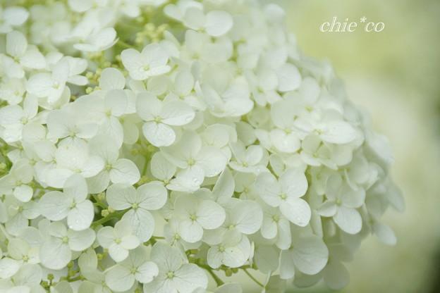八景島-345