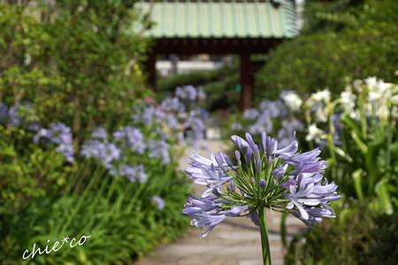鎌倉-310