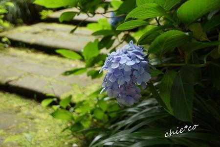 鎌倉-381