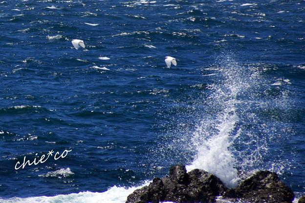 白い波しぶきと・・白い2羽の鳥・・