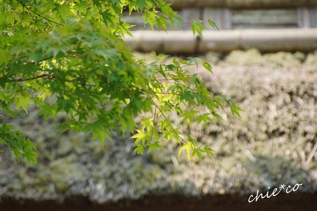 東慶寺-086