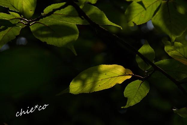 浄智寺-172