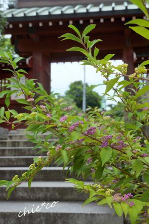 鎌倉-334