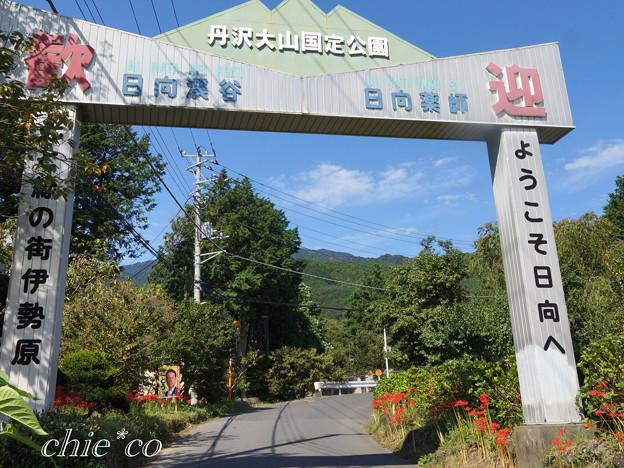 Photos: 日向薬師-379