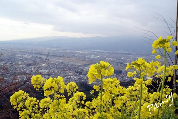 写真: あぐりパークの丘より・・松田山 14