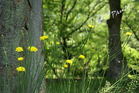 緑のなかに・・黄彩・・