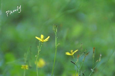 草の緑。。