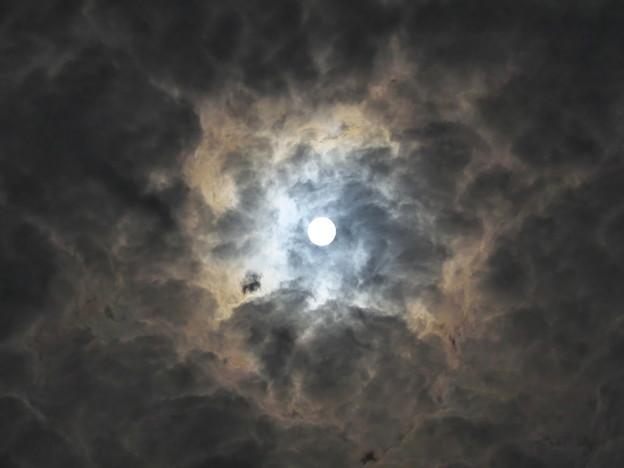 Photos: 月明かり