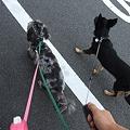 Photos: 右手に小