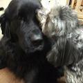 Photos: 毎日相変わらずのお掃除犬にキレイにされています