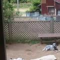 Photos: 広~いお庭で、お兄ちゃんたちとまったり中