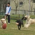 Photos: 犬達~♪