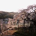 Photos: 奥山田の朝桜