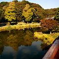 Photos: 称名寺のイチョウ三兄弟!(111123)
