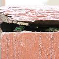 写真: カエルの隠れ家-1