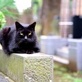 Photos: 墓場の猫