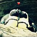 Photos: LOVE LOVE ♪