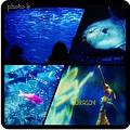 Photos: sunshine aquarium