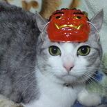 くろすけcat