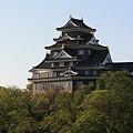 岡山城の新緑