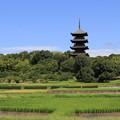 梅雨明け五重の塔