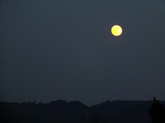 写真: 金の月