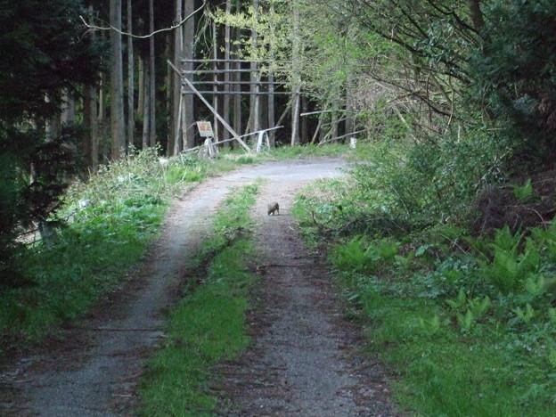 桜とウサギ4